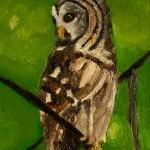 Summer Tree Owl Painting - ..