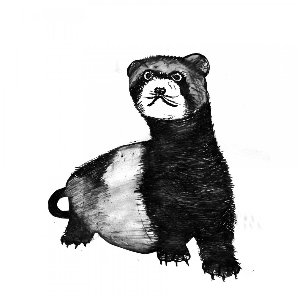 Ferret Art Print Black and White Animal Ink Drawing Series