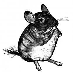 Chinchilla Art Print Black and White Animal Ink Drawing Series  