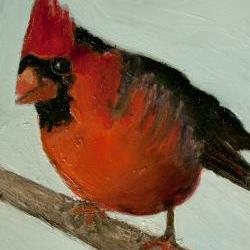Snow Bird, Cardinal, Fine Art Print